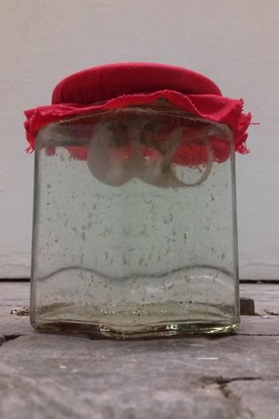 Ein Schraubglas mit rotem Stoffdeckchen darauf. Darin eine leicht trübe Flüssigkeit, schmuddelige Stückchen und ein zerfressenes Schneckenhaus.